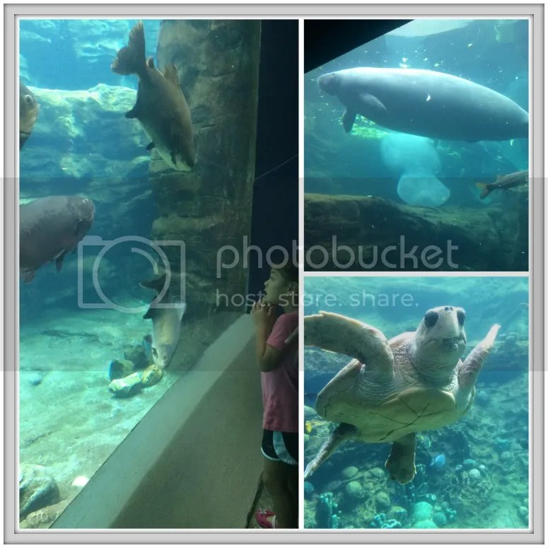Seaworld has many indoor exhibits, so is a great activity for a cloudy day in Orlando