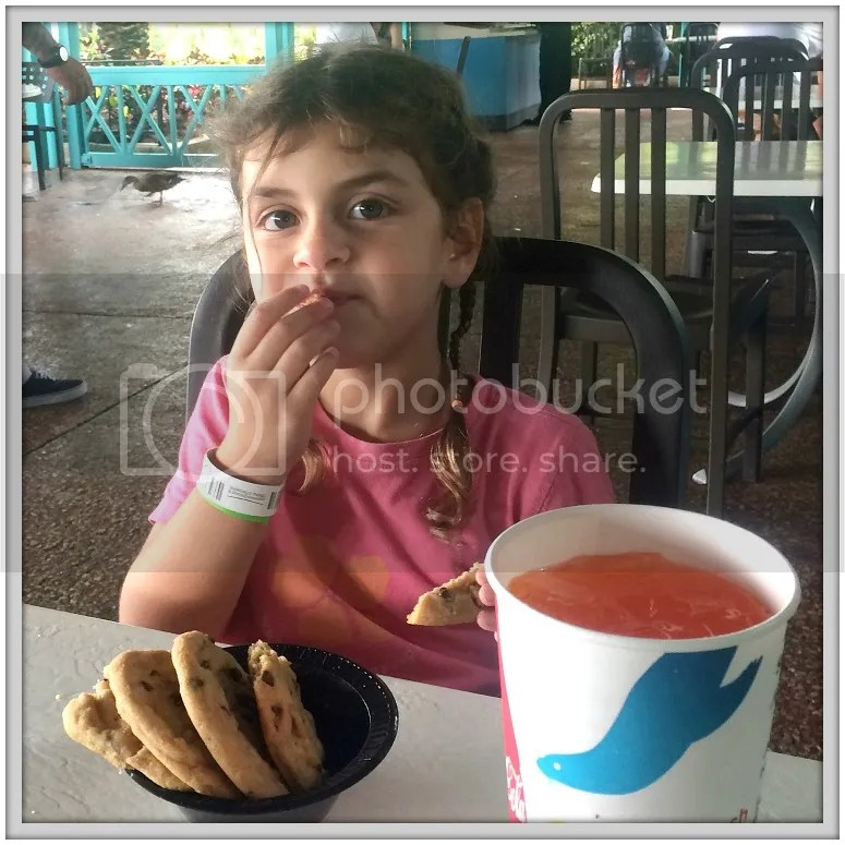 We splurged on the Seaworld DIning plan and found that it was a great deal for our trip. Read more tips and about our experience at Seaworld.