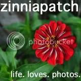The Zinnia Patch