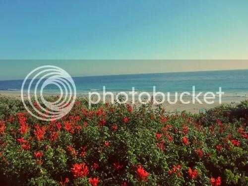 FlowersandOcean