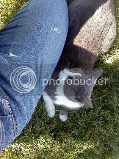 Henry in grass