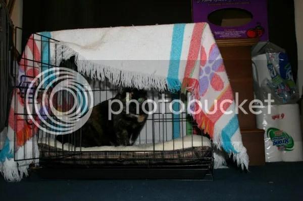 Mauneys bed