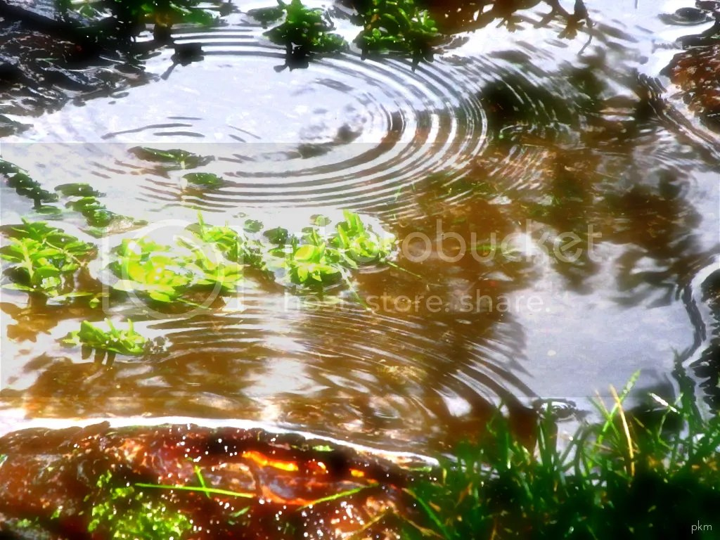 water ripples photo: Ripples water1.jpg