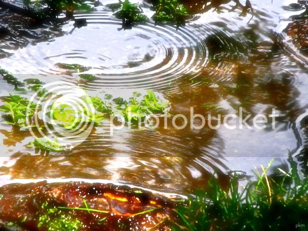 water ripples photo: Ripples water1.jpg