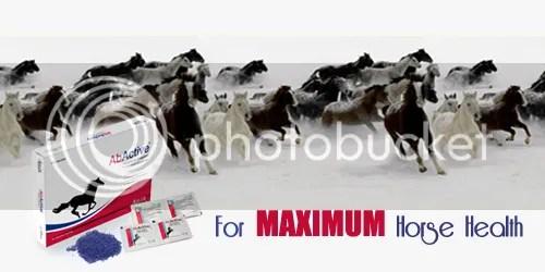 AbActive equine probiotics