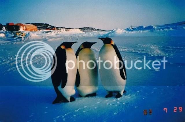 Japánok az Antarktiszon