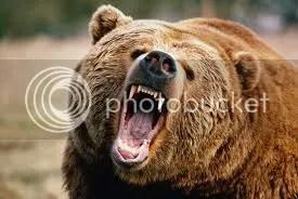 Kiszabadult vad medvéktől rettegtek a lakók