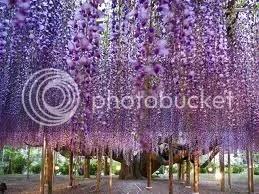 Japán park