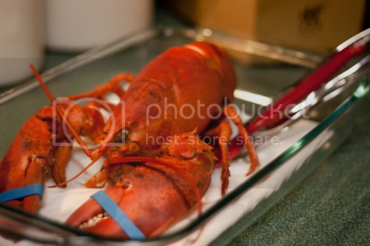 Boiled Lobster | The Domestic Man