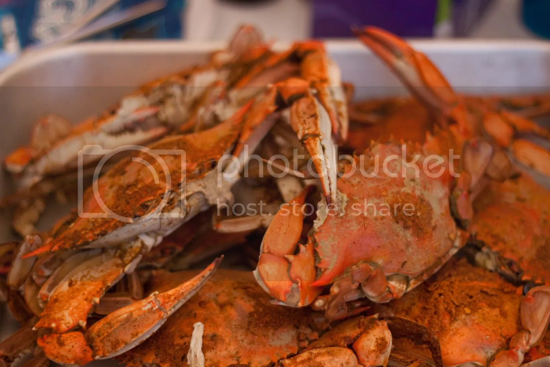 Chesapeake Blue Crab The Domestic Man