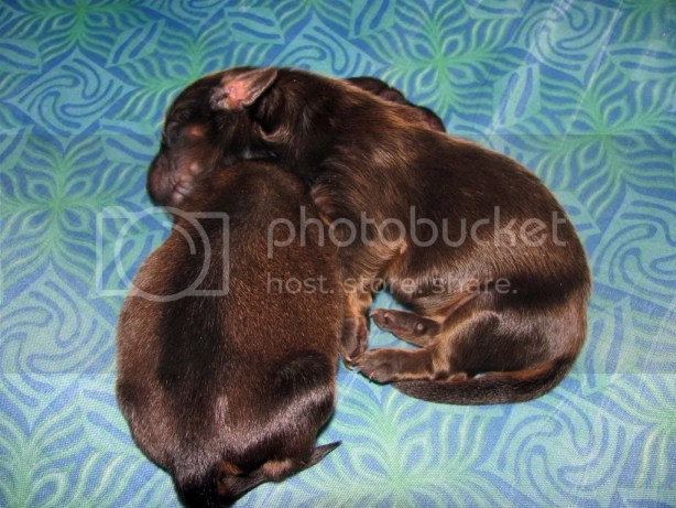 Puppies Love to Cuddle