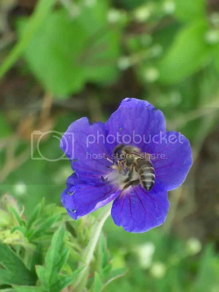 Bee & Flower 1