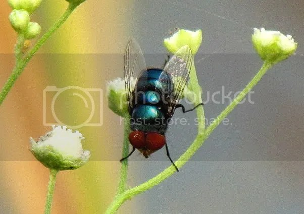 fly sultanpur 011111 dlhi L