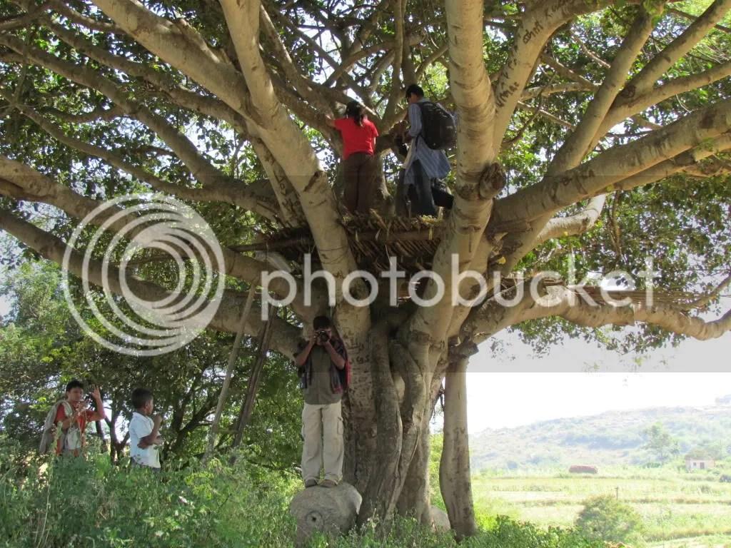 L tree hs 201111 bg