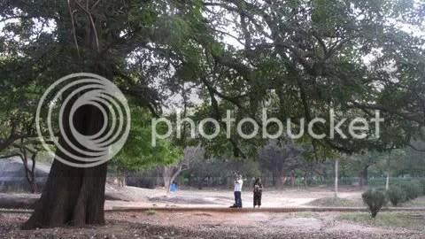 tree shrrm rdha 150311