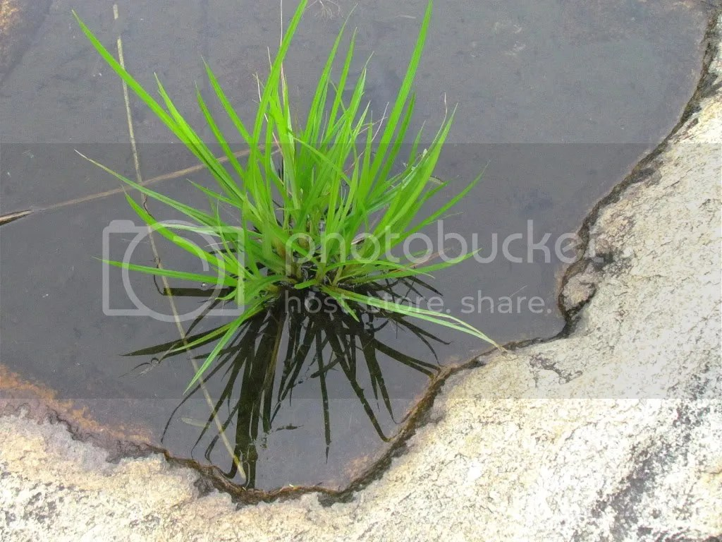 water plnt rghli 070811