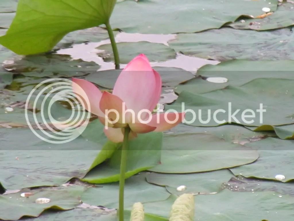 lotus lb 020911