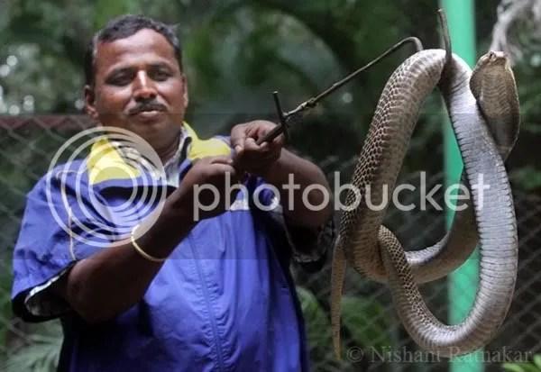 snake shivappa 120811
