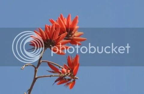 coral tre flwr 130311 vs