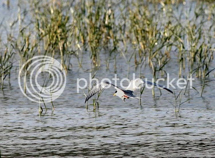 L tern tkoff 291211 mnchnble