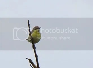 pr snbd birds  bgz