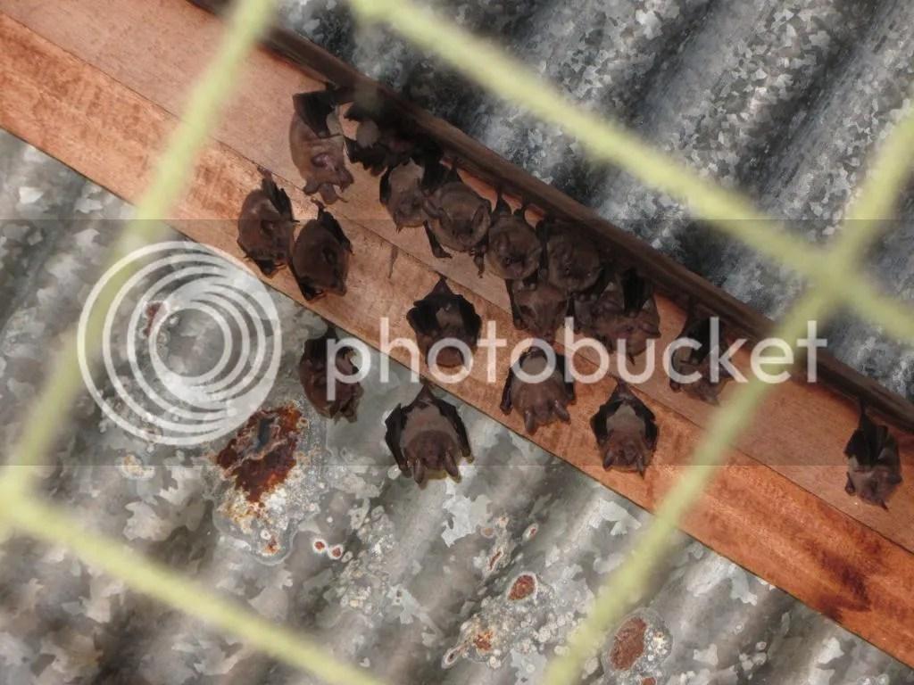 Bats indoors
