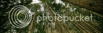 redwood_perspective