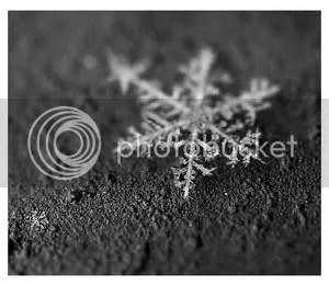 _piece_of_winter__by_fangedfem.jpg