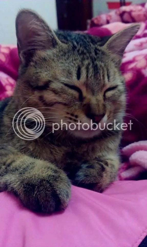 貓咪論壇 - 冬天的食量簡直大到變豬