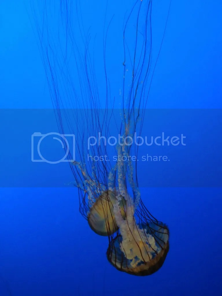 photo Monterey_Bay_Aquarium_3_zpszhi5ehvd.jpg