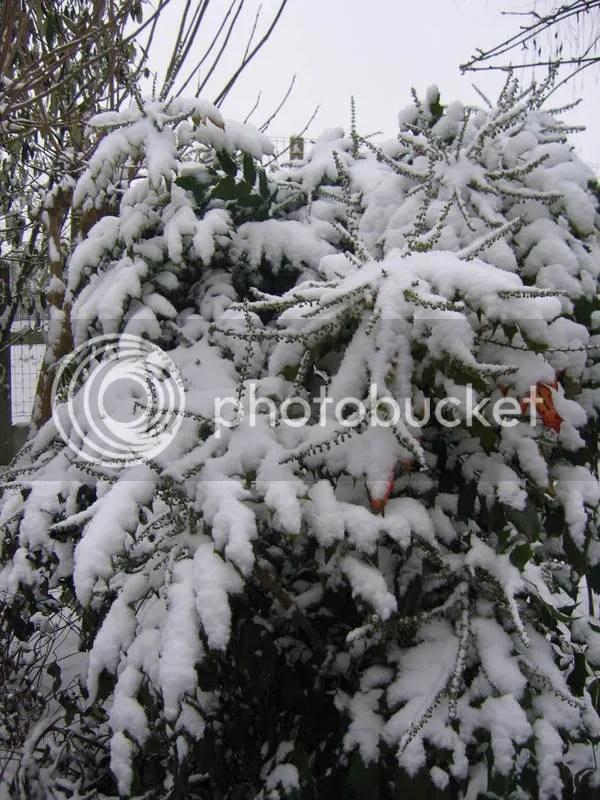 Sneeuw begin januari