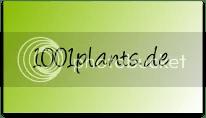 photo blumen pflanzen kakteen hecken Gartenpflanzen Stauden Heckenpflanzen Zierstraumlucher Obst Gemuumlse Zimmerpflanzen Gruumlnp_zpsb2cxjl5p.png