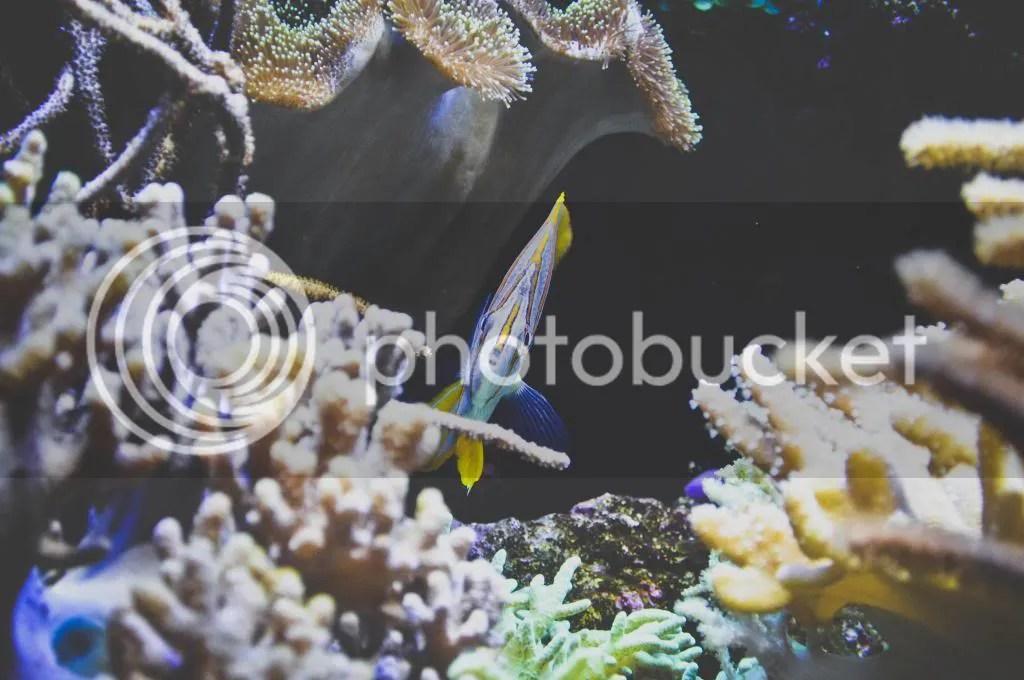 Marine Life Park S.E.A. Aquarium