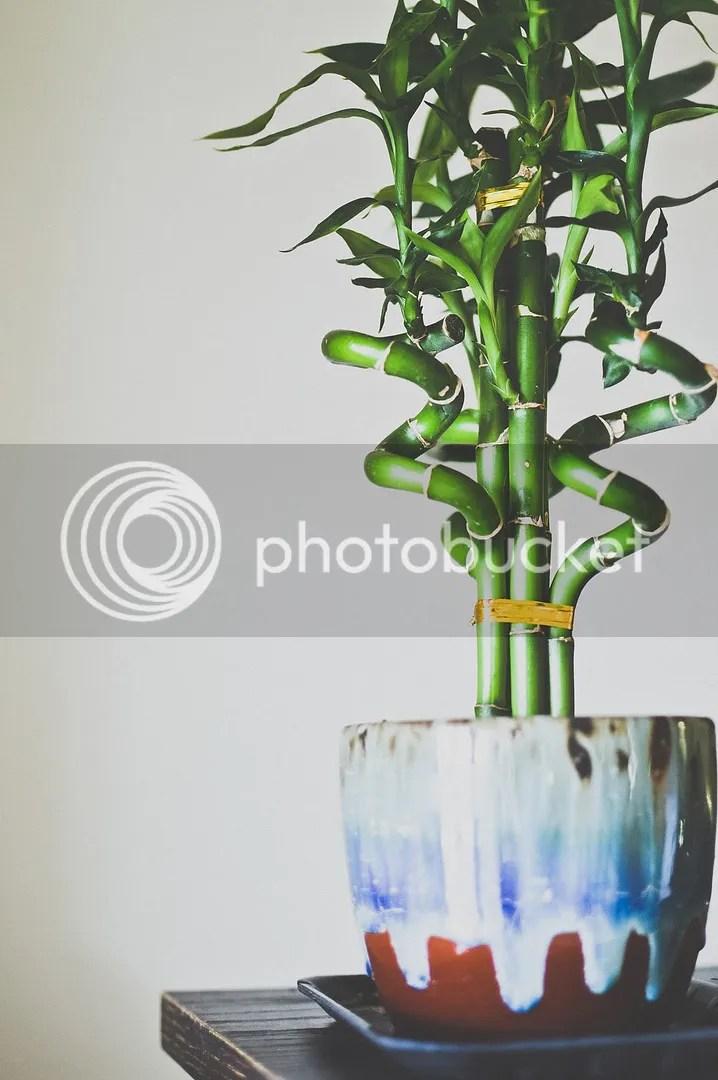 Chinese New Year Bamboo