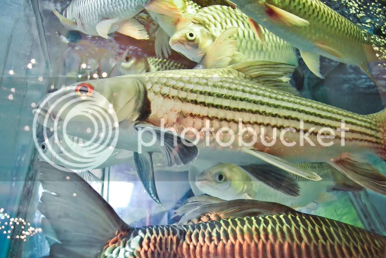 Restaurant Seafood Tank