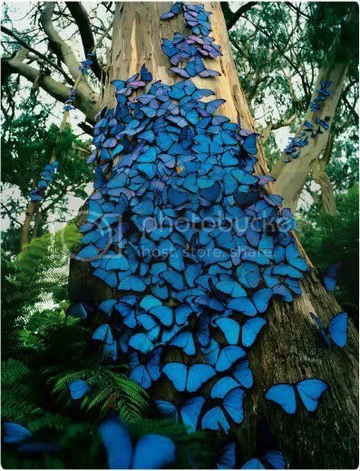 Blue Morpho Butterfly Tree