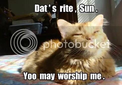 photo caturday sun.jpg