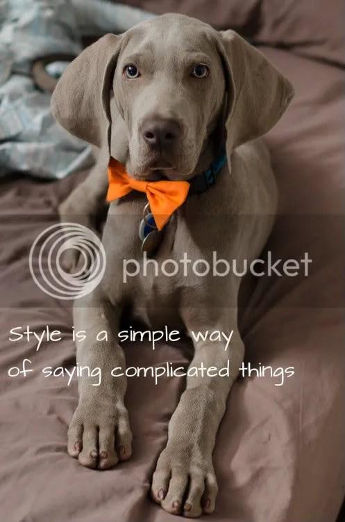 Stylish Cute Dog