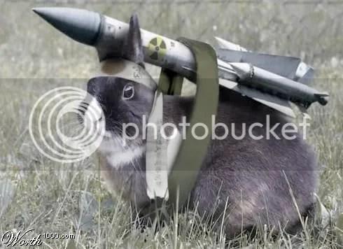 war-bunny