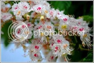 photo flori-castan_zpsawlyq9gr.jpg