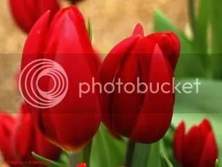 photo 00fL0523HEA.jpg