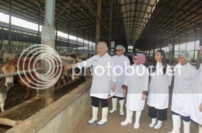 Menteri Perdagangan Kunjungi Perusahaan Peternakan Subang