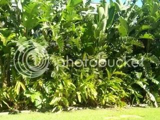 Avoca Beach Palms 15-04