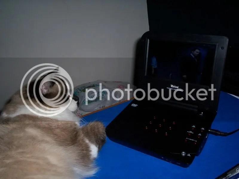 Darcy watching LOCI