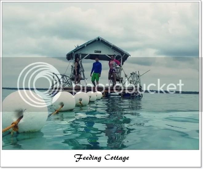 Fish feeding cottage in Virgin Island