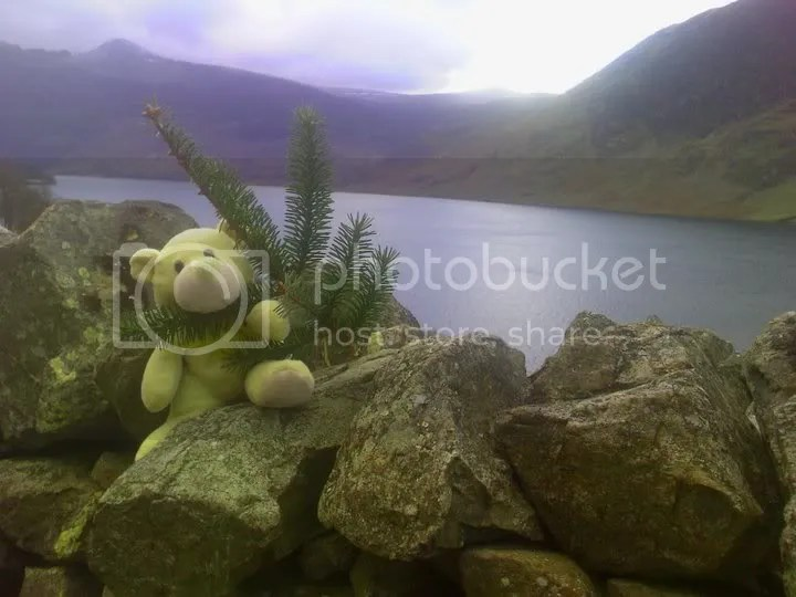 Me and my tree at Crummock Water