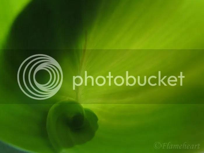 Green Leaf Spiral