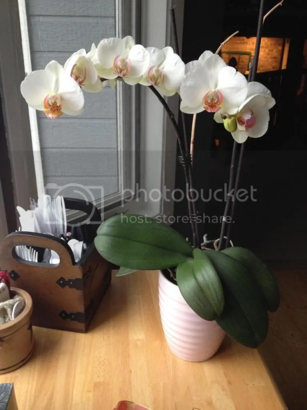 on the orchid that has been telling my story   girlwithblog.com