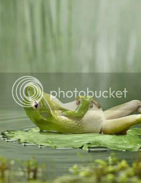 frog photo frog_zpsd09d7c7c.jpg