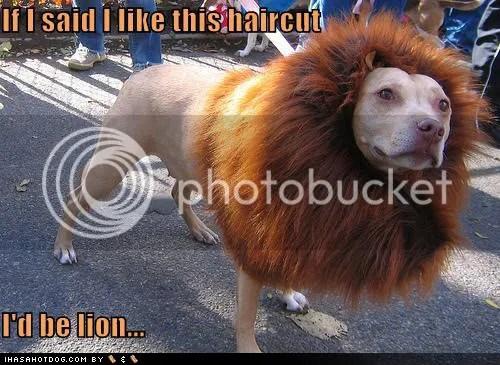 gambar anjing paling garang, anjing singa, gambar anjing macam singa,
